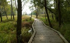 Rollins Savanna - Your Preserves | Lake County Forest Preserves