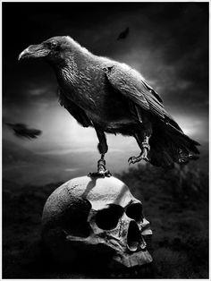crow on skull