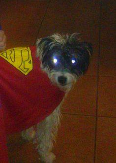 Super Dog!!!!