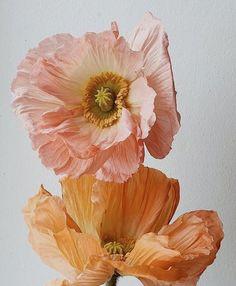 Paper Flowers, Wild Flowers, Sweet Pea Flowers, Paper Peonies, Peach Flowers, Spring Flowers, No Rain, All Nature, Flower Aesthetic