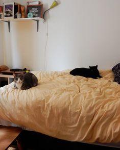Être écolo en colocation : mes expériences | Écolo imparfaite Apartments, Bean Bag Chair, Aesthetics, Articles, Room Decor, Pets, Table, Animals, Furniture