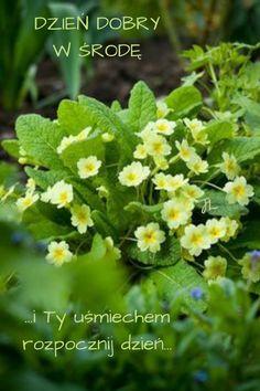 Herbs, Plants, Colors, Herb, Plant, Planets, Medicinal Plants