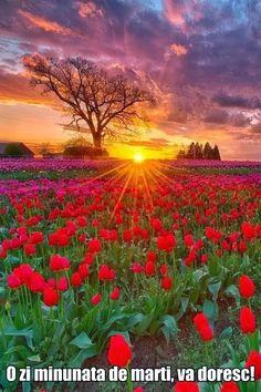 Fotografie: Le daruiesc la toti prietenii mei, sa va fie viata cum sunt acestelalele inflorite, va doresc multa iubire si mult soare in viata voastra, suflete dragi!Sa pretuim vederea trupului dar mai ales pe cea a sufletului!!