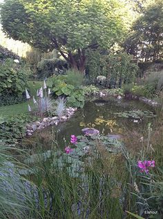 Bertie Bloemers - Flip - Picasa Webalbums