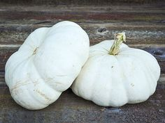 Attractive, very flat, pure white pumpkins that are unique and tasty. A wonderful decorating and eating variety that was historically popular in South Africa and was named for Pumpkin Varieties, Pumpkin Farm, Pumpkin Ideas, Pumpkin Squash, Garden Catalogs, Garden Seeds, Garden Plants, White Pumpkins, White Flats