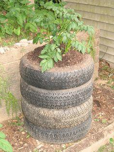Interesting idea for container garden