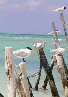 Seagulls sunning in the sand at the seashore. :)