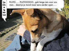 This is our dog on Facebook!!! Pluto.... Plutooooo, tjeee what a long…