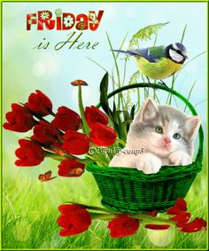 Good morning sister and yours, happy Friday and a Lovely weekend, God bless ☕🍪🌹💖💞💋 Good Morning Sister, Good Morning Wednesday, Morning Cat, Good Morning Roses, Good Morning Funny, Very Good Morning Images, Morning Images In Hindi, Morning Pictures, Friday Gif