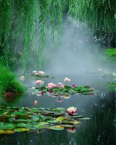 * Photo by ::::::::: Beautiful World, Beautiful Places, Wonderful Places, Tree Watercolor Painting, Picture Composition, Japan Garden, Pond Life, Rain Photography, Lily Pond