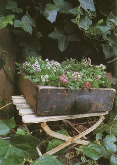 old drawer with plants on white stool.  Repinned by www.silver-and-grey.com