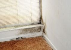 What Causes Mold in a Home? Here are the common conditions that encourage mold growth in the typical household.