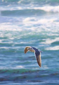 Flying Seagull Beach Photo  5 x 7 Photograph by IrishGoesCoastal, $10.00  Just received this photo for my beach-themed front room. It is GORGEOUS!!! If you love sandy beach and seagull decor, you NEED this picture!