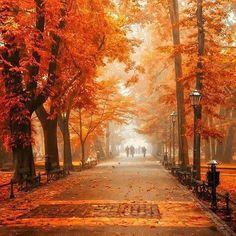 Autumn Walk, Poland