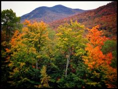Scouting Trip    Here it comes! Let's shoot the Kancamagus on Sunday. Looks like it is now or never!    2013 Performing Images Photography by Pat Corlin  All Rights Reserved    www.PatCorlinPhotography.com    #iPhoneography #nh #newengland #lincoln #autumn #mountain