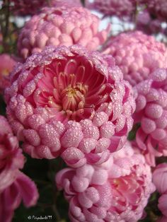 Pink Perfection!! Wonder what it is and where it grows at? Just beautiful!