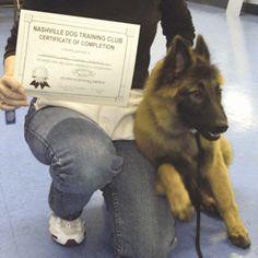 Nashville Dog Training Club