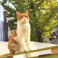 월간지상 . . . #냥스타그램#캣스타그램#펫스타그램#고양이#야옹이#반려동물#cat#neko#kitty#... Follow us on Instagram :D #cats #cat #catlover #lovecats #funny #fun #cute #socute #feline #felines #felinefriend #fur #furry #paw #paws #kitten #kitty #kittens #kittycat #kittylove #fluffy #fluff