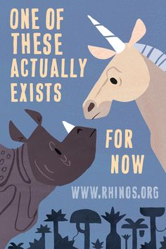 Help save the rhino! Visit the International Rhino Foundation to see how you can help. https://www.rhinos.org/