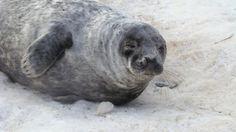 New money for Quebec seal hunt study draws praise, protest