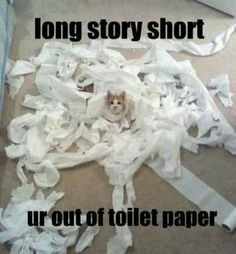 You need more toilet paper