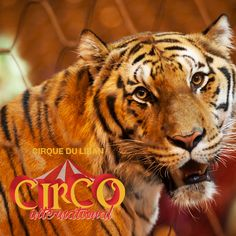 CIRCO International- Starting October 25th facing Forum de Beyrouth Make sure you're not missing it out! #cirqueduliban  #circointernational