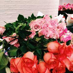 flowers#roses