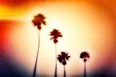Tropical Beach Surf Decor Palm Trees Photography Red by NatureCity, $25.00