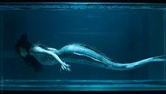 series mermaid GIF by Siren - Find & Share on GIPHY -tv series mermaid GIF by Siren - Find & Share on GIPHY - Картинка с тегом «dark, quote, and tale Mermaid Gifs, Siren Mermaid, Mermaid Art, Mermaid Paintings, Tattoo Mermaid, Vintage Mermaid, Magical Creatures, Fantasy Creatures, Sirens Tv