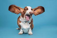 Comment gérer les aboiements de votre chien ?
