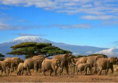 Faire un safari | #Tanzanie vivre une aventure hors du commun www.bonplansvoyage.com