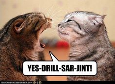 funny cat pictures - Forrest Gump Cats