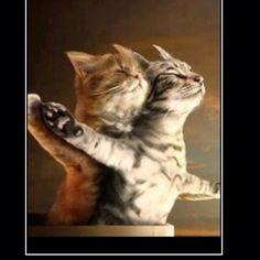 New cat version of Titanic