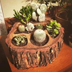 Succulent Gardening, Cacti And Succulents, Container Gardening, House Plants Decor, Plant Decor, Wood Planters, Garden Planters, Garden Crafts, Garden Projects