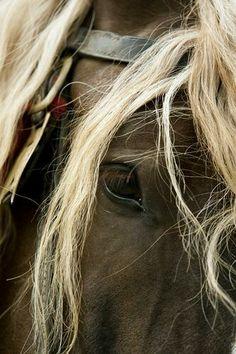 Horses ♥ - Community - Google+