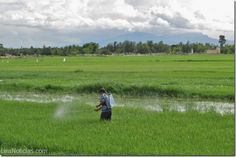 Agricultores desarrollan cáncer por el uso excesivo de plaguicidas - http://www.leanoticias.com/2014/01/30/agricultores-desarrollan-cancer-por-el-uso-excesivo-de-plaguicidas/