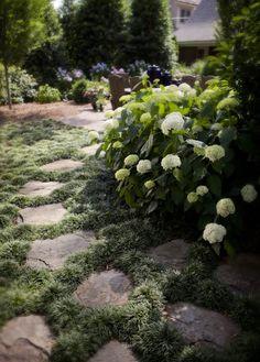 walkway with hydrangeas