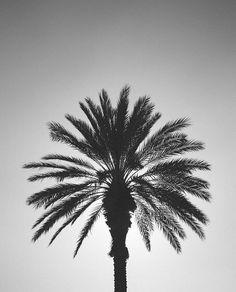joliment, noir et blanc, Californie, grise, Los Angeles, palme, palmiers, ciel, arbre, Tumblr