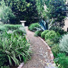Good morning from the shop garden, come say hi! Garden Paving, Terrace Garden, Garden Paths, Lawn And Garden, Garden Landscaping, Landscape Design, Garden Design, North Garden, California Garden