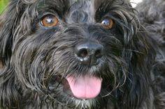 Tilly, a brilliant model