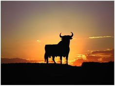 Image result for spain bull billboard