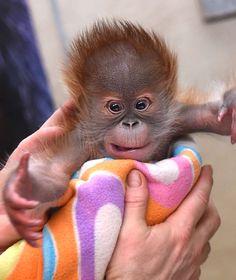 Die 20 besten Bilder von ZooTierpark Berlin   Tierpark