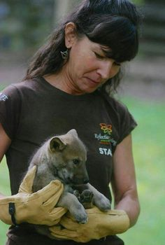 New red wolf pup at Reflection Riding in Chattanooga, TN! Wolf Pup, Red Wolves, Puppies, Reflection, Animals, Cubs, Animales, Animaux, Animal