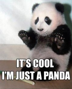"""""""Chill man! Just a panda!"""" this situation happened in real life with me and my friends it was great! :D"""
