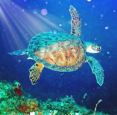 Are you thinking of buying a tortoise to keep? If so there are some important things to consider. Tortoise pet care takes some planning if you want to be. Baby Sea Turtles, Sea Turtle Art, Turtle Love, Cute Turtles, Beautiful Sea Creatures, Animals Beautiful, Sea Turtle Pictures, Animals And Pets, Cute Animals