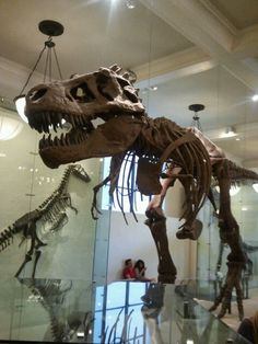 Museum of Natural History NYC