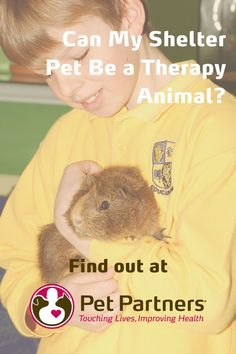 Can My Shelter Pet Be a Therapy Animal? | Pet Partners | YES! Pet Partners has some great tips for finding the right shelter pet for your therapy animal team. Dogs, cats, rats, guinea pigs, birds, and even rabbits can be part of a therapy animal team. Get the tips you need to pick the perfect shelter pet for your therapy animal team and explore other great blogs at PetPartners.org. Emotional Support Dog Training, Emotional Support Animal, Training Quotes, Therapy Dogs, Service Dogs, Animals For Kids, Guinea Pigs, Rabbits, I Can