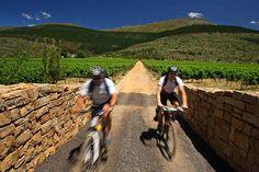 Mountain biking in Franschhoek @ Glenwood Vineyards