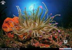 Anemone in Cancun - Mexico