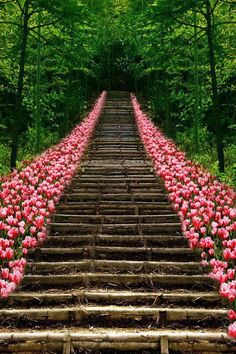 We look for the beauty first... w/out seeing how difficult the pathway....